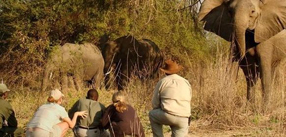 Resor till Safari i Afrika på Kruger Park