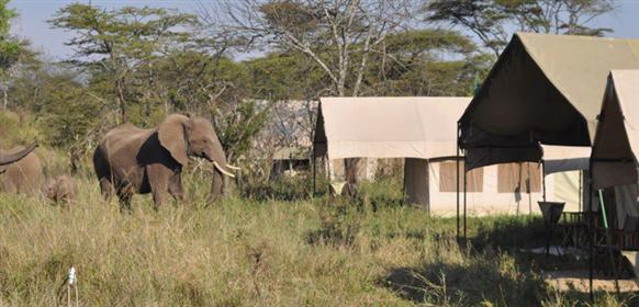 elefant vid Angani serengeti Camp