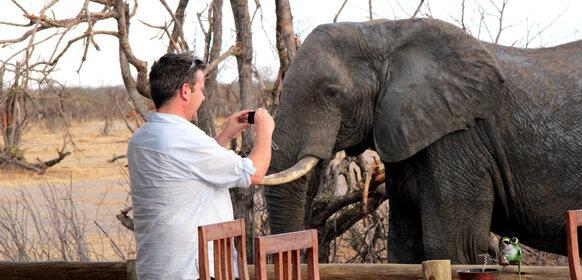 Nära en elefant i Zimbabwe