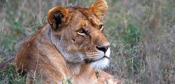 Safari till Masai Mara