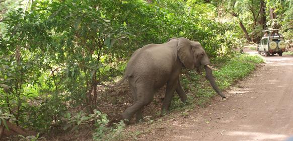 Djur och natur i Lake Manyara
