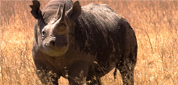 Djur och natur i Ngorongorokratern