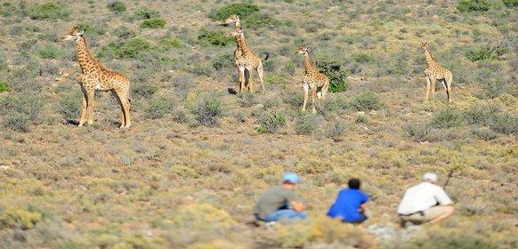 Safari Sanbona