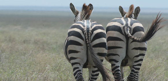 Serengetis ekosystem