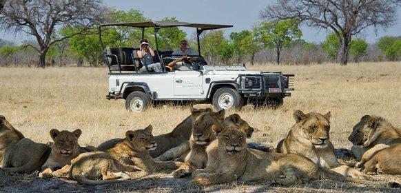 Resa till Hwange National Park i Zimbabwe